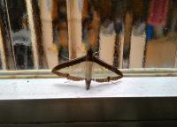 moth control by window